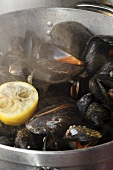 Steamed Irish mussels with lemon