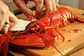 Breaking up a cooked lobster