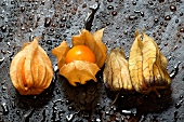 Four physalis on wet wood