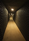 Wine cellar walls lined with bottles of cava