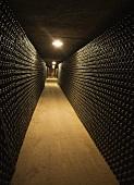 Viele Flaschen Cava lagern im Weinkeller