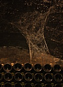 Spider webs and bottles in wine cellar