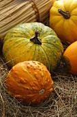 Variety of Pumpkins; Outdoors on Hay
