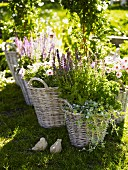 Herbs and flowers in baskets in a garden