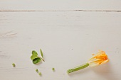 Courgette flower on wooden background