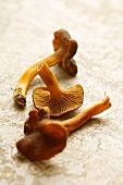Three funnel chanterelles