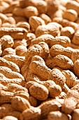 Peanuts (macro zoom)