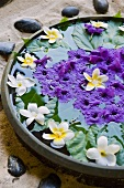 Flowers in a bowl of water (Hotel and Ayurveda Spa Shanti Maurice)