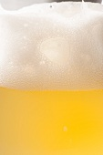 Pale Lager with Large Head in a Glass; Close Up
