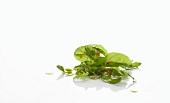 Fresh lettuce leaves against white background