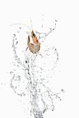 Garnele und Wasser