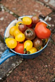 Various tomatoes in an enamel pan