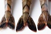 Three prawn tails (close-up)