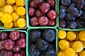 Various varieties of plums in cardboard punnets (whole picture)