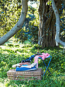 A picnic basket in a wood