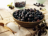 A bowl of fresh sloes