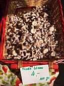 Basket of Bluefoot Mushrooms at The Carouge Market is in Geneva Switzerland
