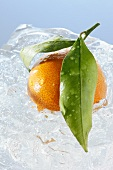 Mandarin orange with leaves in a block of ice