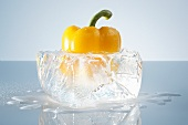 Yellow pepper in a block of ice
