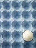 A goose egg in an egg carton