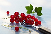 Redcurrants on a fork