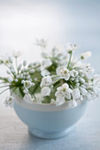 A bowl of white ornamental allium