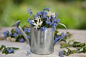 Forget-me-not and chive flowers in a small zinc watering can