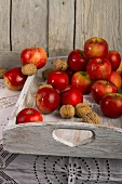 Apples and nuts on a white wooden tray