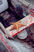 Sea Star in an Old Boat