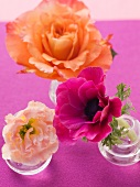 Flowers in a small glasses on a purple surface