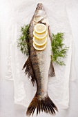 Fish with lemons and dill on parchment paper