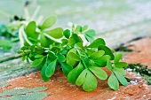 Herb-of-Grace (ruta graveolens)