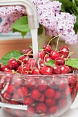Cherries being washed under running water