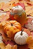 Pumpkins on maple leaves