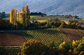Donzelle vineyard in Dardigny (Switzerland)