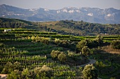 Vineyards belonging to the Clos Mogador winery, Catalonia