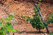 Red stone at the Clos d Agon winery, Calonge, Spain