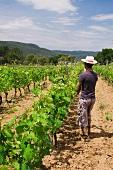 Reben einschlaufen, Weingut Clos d'Agon, Calonge, Spanien