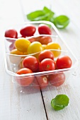 Cherry tomatoes in a plastic container with basil