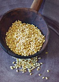 Tender wheat grains on a wooden spoon