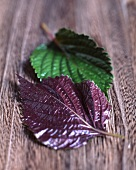 Red and green shiso leaves