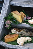 Various types of cheese on wooden steps