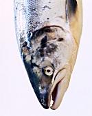 A salmon head