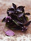 Purple basil with flowers