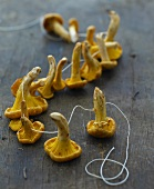 Fresh chanterelle mushrooms on a string