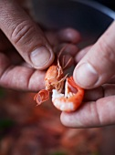 Prawns being peeled