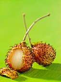 Two rambutans, one opened