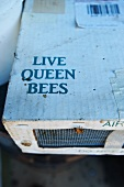 Shipping Box of Live Queen Bees with a Worker Bee Crawling on the Outside of the Box