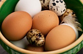Bowl of Brown and White Chicken Eggs with Quail Eggs and Feathers