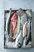 Various types of fish on ice